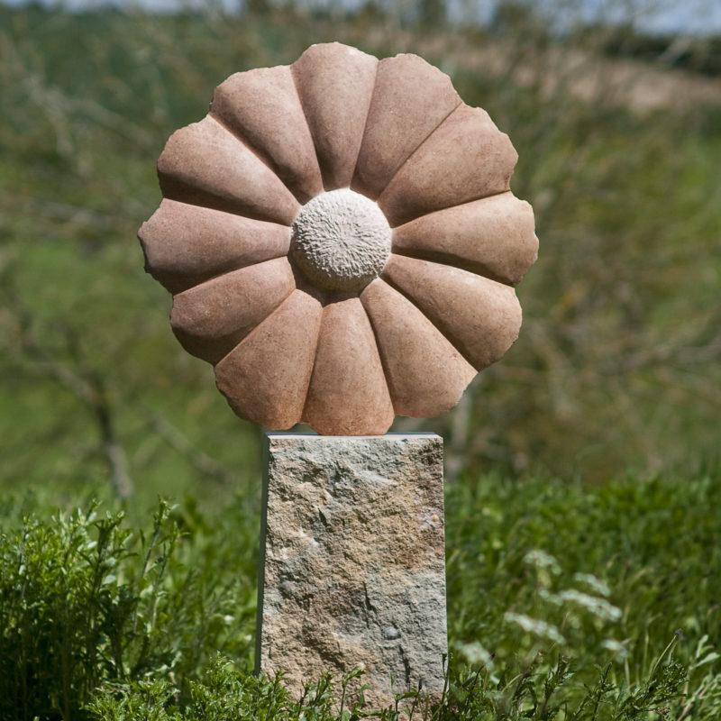Pink Daisy image