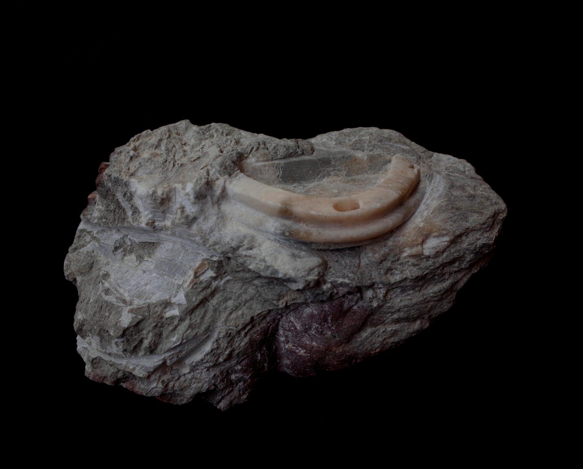 Anthropocene fossil no.1 image
