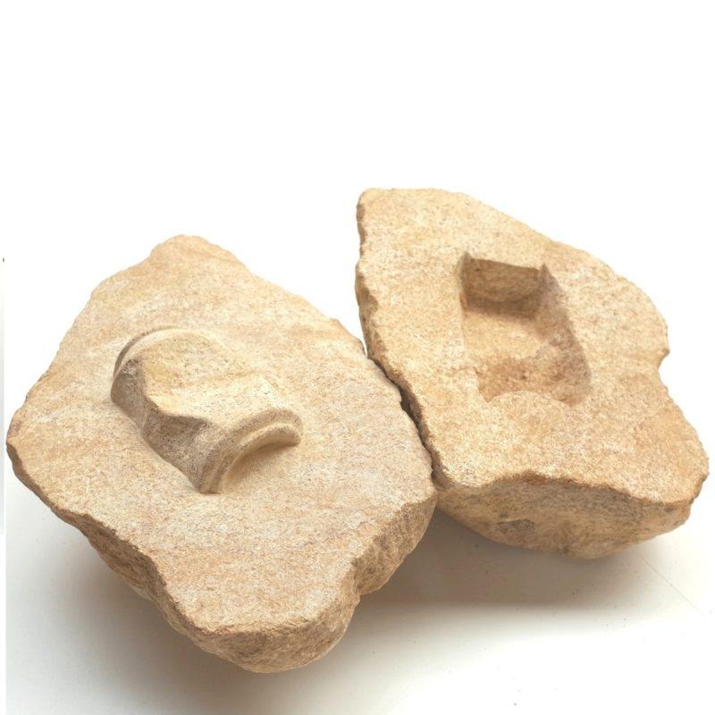 AF2 (drink can fossil) image