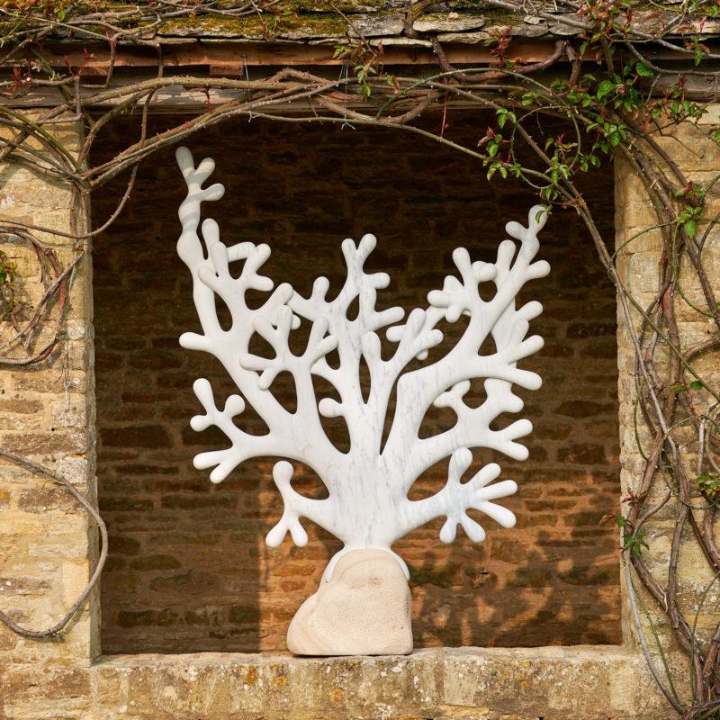 Tree Coral image