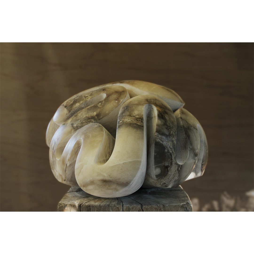 Brain Coral image